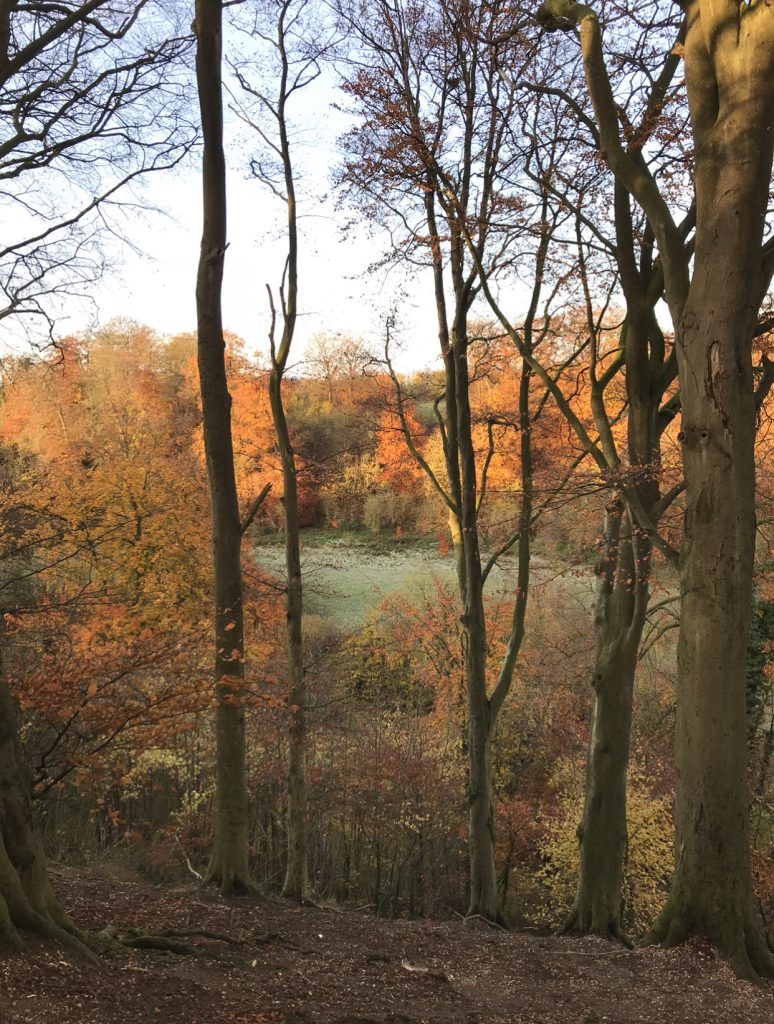 Bitter sweet symphony - autumnal trees near home  theunravelling.net